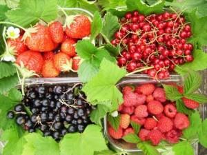 fruits-rouges-anticancer